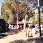 Pineta-150x150 La Storia