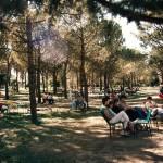 Pineta1-150x150 La Storia